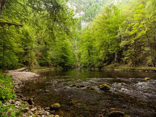 Discover Gorski Kotar, an oasis of magical woods and rivers